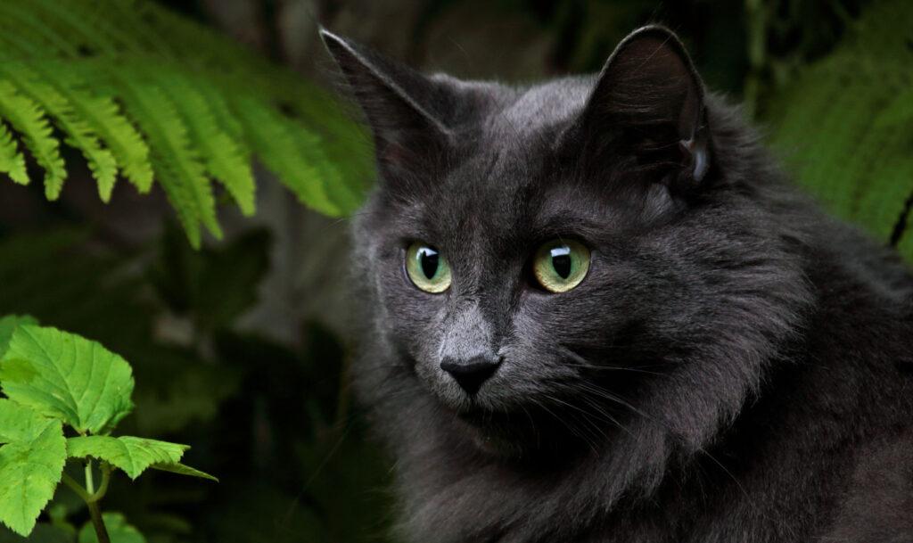 Wenn eine Norwegische Waldkatze zu verschenken ist, sollte einen das stutzig machen